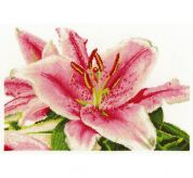 DMC Stargazer Lily Counted Cross Stitch Kit
