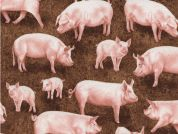 Timeless Treasures Pigs Poplin Quilting Fabric