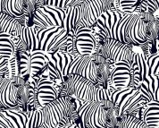 Digital Print Cotton Fabric  Black & White