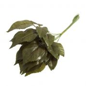 Leaves on Stems  Green