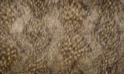 Fantasy Faux Fur Fabric  Brown