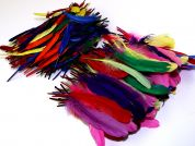 Feathers Value Pack  Assorted Colours