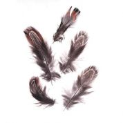 Natural Almond Pheasant Feathers