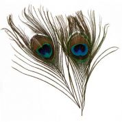 Natural Peacock Feathers