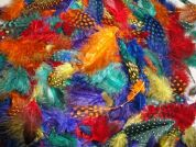 Marabou & Guinea Feathers Value Pack  Assorted Colours