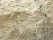 Plume Feather Couture Bridal Lace Fabric  Ivory